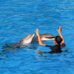 a4473ee1 honolulu dolphins 150x150 - ハワイでイルカとカメと一緒に泳ごう