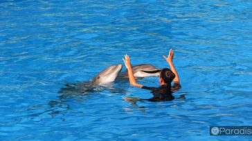 a4473ee1 honolulu dolphins 364x205 - ハワイでイルカとカメと一緒に泳ごう