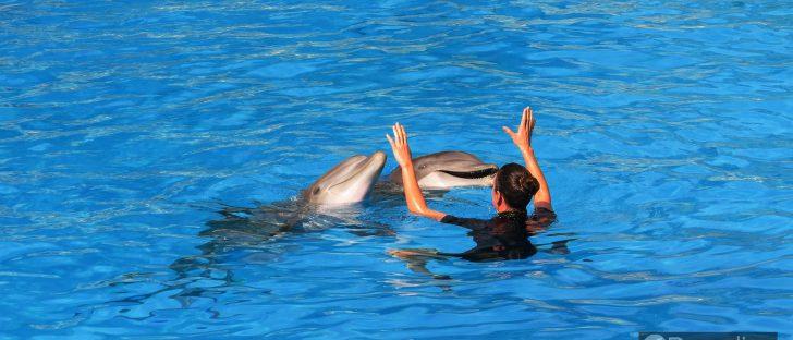 a4473ee1 honolulu dolphins 728x312 - ハワイでイルカとカメと一緒に泳ごう