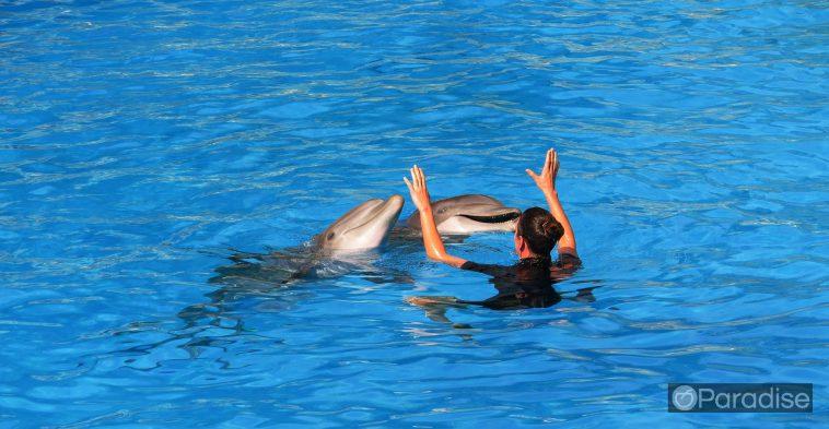 a4473ee1 honolulu dolphins 758x393 - ハワイでイルカとカメと一緒に泳ごう