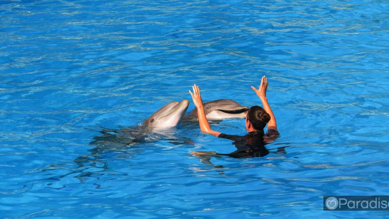 a4473ee1 honolulu dolphins 758x426 - ハワイでイルカとカメと一緒に泳ごう