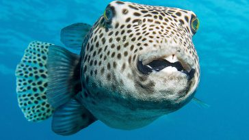 cbcd33d3 hawaii underwater 364x205 - Instagramで是非フォローしたいハワイの水中カメラマンTop10
