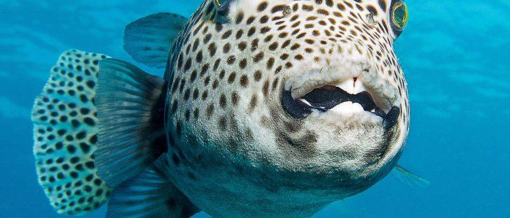 cbcd33d3 hawaii underwater 728x312 - Instagramで是非フォローしたいハワイの水中カメラマンTop10